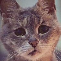 可爱的猫咪头像图片