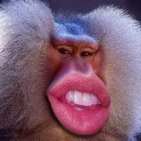 大猩猩搞笑可爱头像图片1