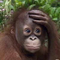 大猩猩搞笑可爱头像图片12