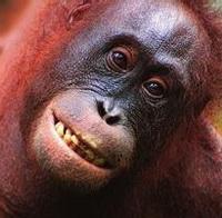 大猩猩搞笑可爱头像图片14