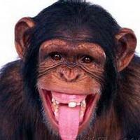 大猩猩搞笑可爱头像图片17