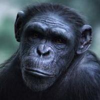 大猩猩搞笑可爱头像图片20