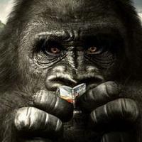 大猩猩搞笑可爱头像图片24