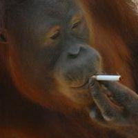 大猩猩搞笑可爱头像图片28
