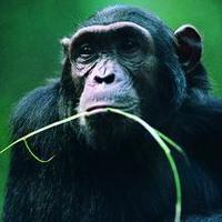 大猩猩搞笑