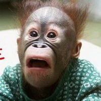大猩猩搞笑可爱头像图片6