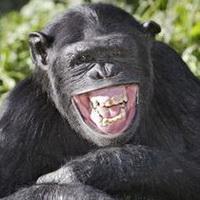 大猩猩搞笑可爱头像图片8
