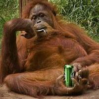 大猩猩搞笑可爱头像图片9