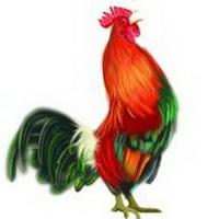 微信头像卡通猴_公鸡母鸡头像_公鸡母鸡qq头像图片_生肖卡通鸡扣扣空间微信头像 ...