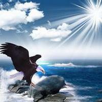 老鹰飞翔素描图片_老鹰头像_老鹰qq头像图片_飞翔鹰扣扣空间微信头像大全