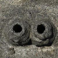 猪鼻子猪鼻孔头像图片13
