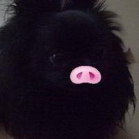 猪鼻子猪鼻孔头像图片25