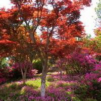 春暖花开唯美头像图片10