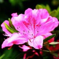 春暖花开唯美头像图片11