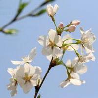 春暖花开唯美头像图片13