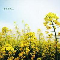 春暖花开唯美头像图片15