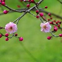 春暖花开唯美头像图片17