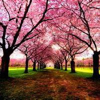 春暖花开唯美头像图片18