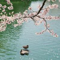 春暖花开唯美头像图片2