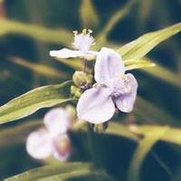 春暖花开唯美头像图片20
