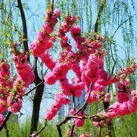 春暖花开唯美头像图片21