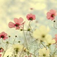 春暖花开唯美头像图片22