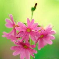 春暖花开唯美头像图片23