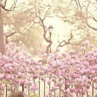 春暖花开唯美头像图片24