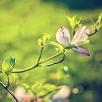 春暖花开唯美头像图片27