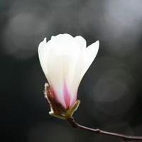 春暖花开唯美头像图片30