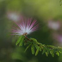 春暖花开唯美头像图片31