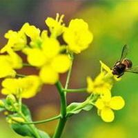 春暖花开唯美头像图片32