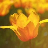 春暖花开唯美头像图片33