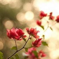春暖花开唯美头像图片35