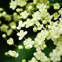 春暖花开唯美头像图片37