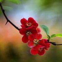 春暖花开唯美头像图片38