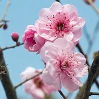 春暖花开唯美头像图片39