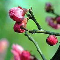 春暖花开唯美头像图片5