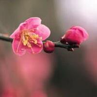 春暖花开唯美头像图片7
