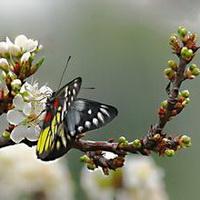 春暖花开唯美头像图片8