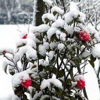 冬天唯美风景雪花头像图片12