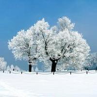 冬天唯美风景雪花头像图片13