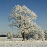 冬天唯美风景雪花头像图片14