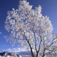 冬天唯美风景雪花头像图片17