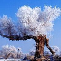 冬天唯美风景雪花头像图片19