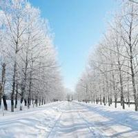 冬天唯美风景雪花头像图片20