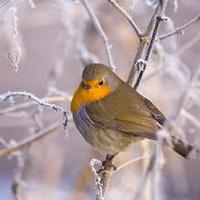 冬天唯美风景雪花头像图片21