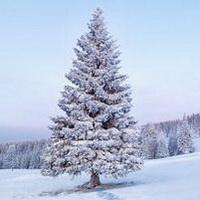 冬天唯美风景雪花头像图片30