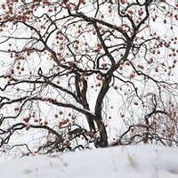 冬天唯美风景雪花头像图片36