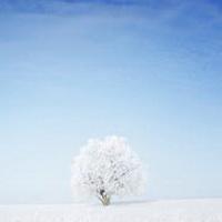 冬天唯美风景雪花头像图片6